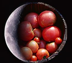 実は、トマトは美肌の頼もしい味方です。さて、それではいつ食べると一番美肌効果が期待できる?(1)朝 (2)昼 (3)夜メイン画像
